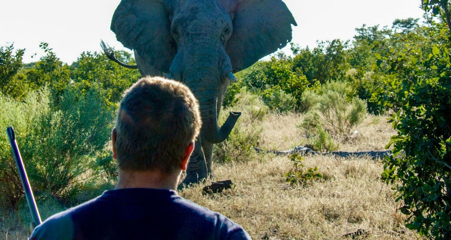 Okavango Guiding & Trails Courses