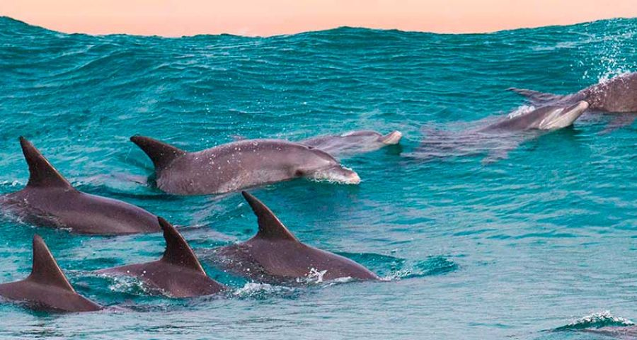Dolphin Research & Marine Conservation